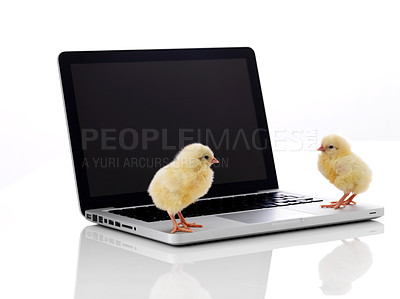 Buy stock photo Two little chick on laptop computer isolated over white background