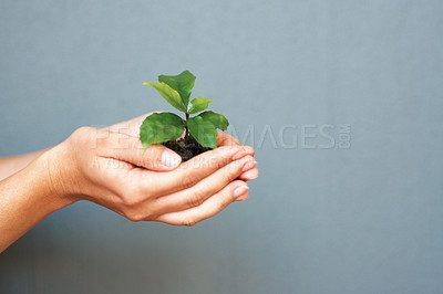 Buy stock photo Hands holding green plant on grey background