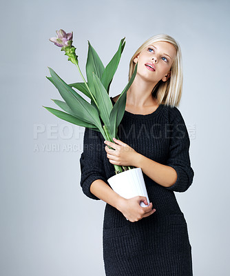 Buy stock photo Attractive woman holding a plant isolated on grey