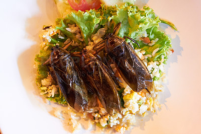 Buy stock photo Fried cockroaches presented on a bed of rice with a side salad
