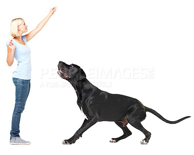 Buy stock photo Cute young woman enticing her great dane to jump up and get a treat while isolated on white