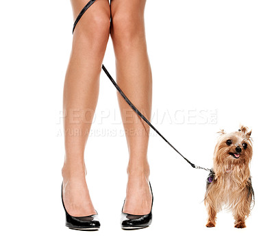 Buy stock photo Cropped image of a woman's legs with her yorkshires terrier's leash wrapped around them