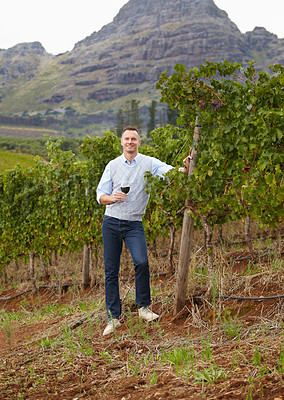 Buy stock photo Portrait of a mature wine maker holding a glass of red wine while standing in the vineyard