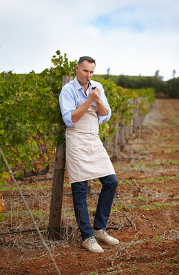 Buy stock photo A mature wine maker taking a break and smoking a pipe in the vineyard