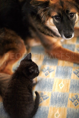Buy stock photo A high angle shot of a kitten and young dog lying on a bed