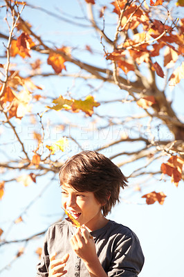 Buy stock photo A little boy holding an autumn leaf