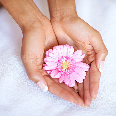 Buy stock photo Cropped view of two hands holding a gerber daisy against a white towel