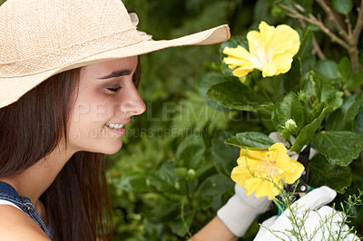 Buy stock photo A beautiful young woman tending to the flowers in her garden