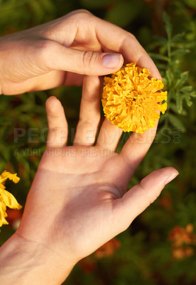 Buy stock photo Cropped shot of a woman holding a yellow fellow