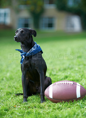 Buy stock photo A black canine sitting in a garden with a ball beside him