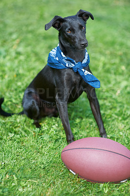 Buy stock photo A black canine sitting in a garden with a ball i nfront of him