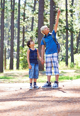 Buy stock photo A boy standing outside holding his younger brother's hand pointing upwards towards the tree