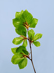 Bright and leafy branch