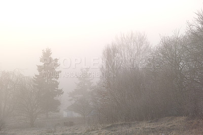 Buy stock photo Shot of a forest during a foggy morning