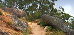 Scenic Western Cape hiking trail