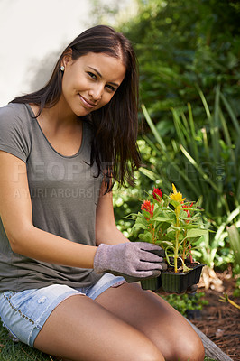 Buy stock photo Cropped shot of a woman about to plant a six-pack of seedlings