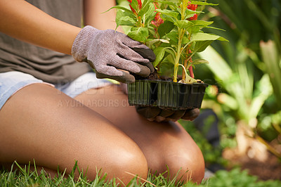 Buy stock photo Cropped shot of a woman transplanting a seedling