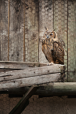 Buy stock photo An owl sitting on pieces of wood outdoors
