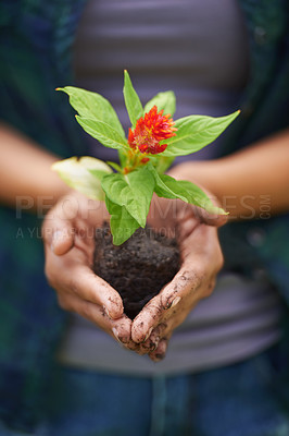 Buy stock photo Closeup shot of a woman's hands holding a young plant