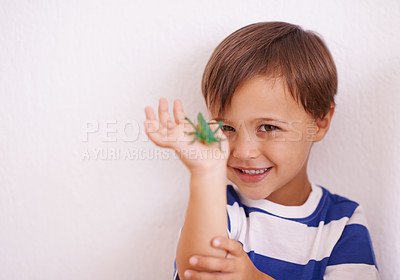 Buy stock photo A young boy holding a bug