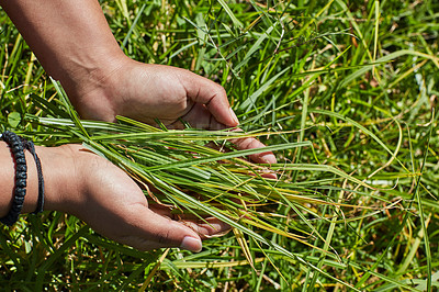 Buy stock photo Cropped shot of an unidentifiable person holding a handful of freshly cut grass