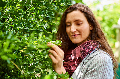 Buy stock photo Shot of a smiling woman standing in her organic garden