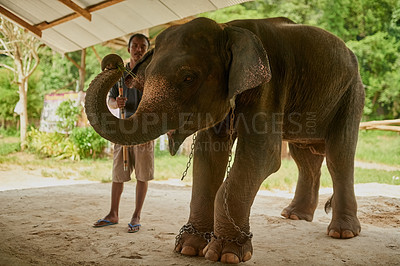 Buy stock photo Shot of an Indian elephant in and its handler standing under a canopy