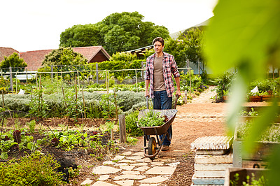 Buy stock photo Shot of a man pushing a wheelbarrow through his organic garden