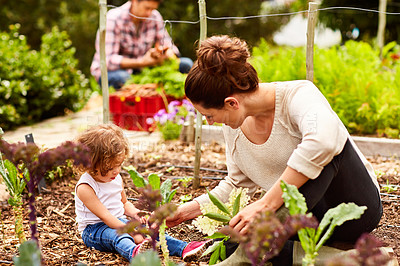 Buy stock photo Shot of a smiling couple with their little girl working in their organic garden