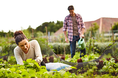 Buy stock photo Shot of a mature couple working in their organic couple