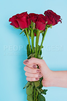 Buy stock photo Cropped shot of an unrecognizable woman holding roses against a blue background
