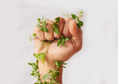 Buy stock photo Cropped shot of an unidentifiable woman's hand clenching flowers in a fist in studio