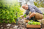 Keeping my retirement active and productive with gardening