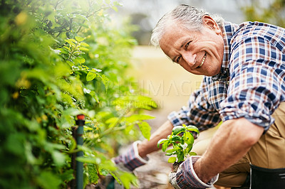 Buy stock photo Portrait of a senior man spending some time out in the garden
