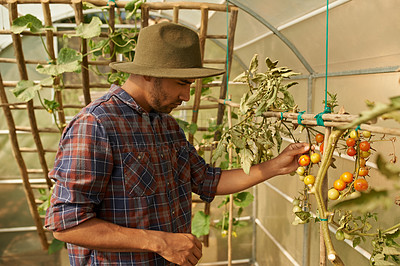 Buy stock photo Shot of a young man working in a greenhouse