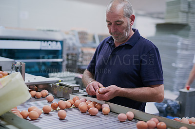 Buy stock photo Shot of a focused mature factory worker sorting out chicken eggs on a conveyer belt inside of a factory