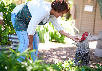 Buy stock photo Shot of a mature woman bonding with her pet chicken in her garden at home