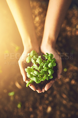 Buy stock photo Closeup shot of an unrecognizable woman holding a plant growing out of soil