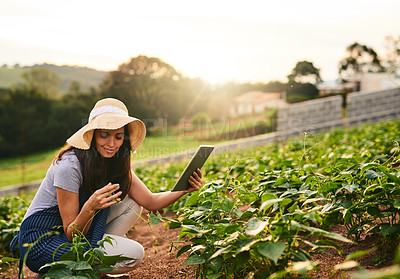 Buy stock photo Shot of an attractive young woman using a tablet while working on her farm