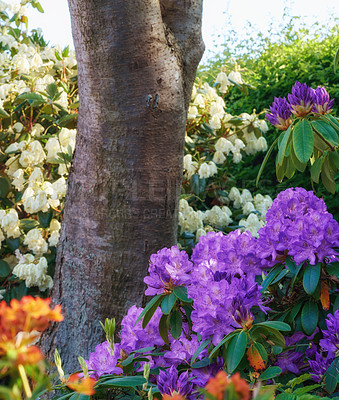 Buy stock photo Shot of beautiful flowers outside