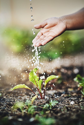 Buy stock photo Closeup shot of an unrecognizable person watering a plant outdoors