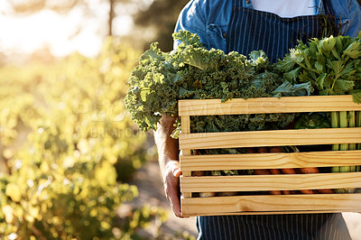 Buy stock photo Cropped shot of a man holding a crate full of freshly picked produce on a farm