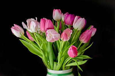 Buy stock photo Beautiful bunch of tulips