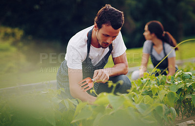 Buy stock photo Shot of a young man working in a garden with his wife in the background