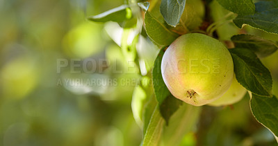 Buy stock photo A motion and lens blurred photo of green apples. Useful as background.