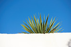 Wall, plant and blue sky - background