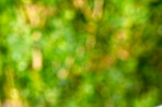 Blurred garden  - background