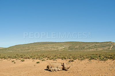 Buy stock photo Shot of a rhino and her baby in the wild