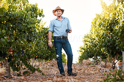 Buy stock photo Portrait of a farmer holding a bunch of grapes in a vineyard