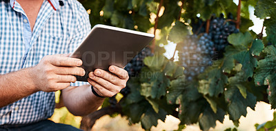 Buy stock photo Closeup shot of a farmer using a digital tablet working in a vineyard